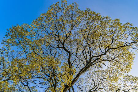 Branches of a tree with green leaves on a blue sky background. Archivio Fotografico