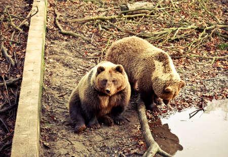 brown bear in wild park.  daytime Stock Photo - 12195007