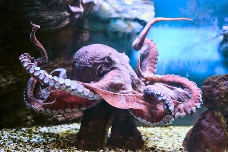 Beautiful Sea World. Sea octopus.