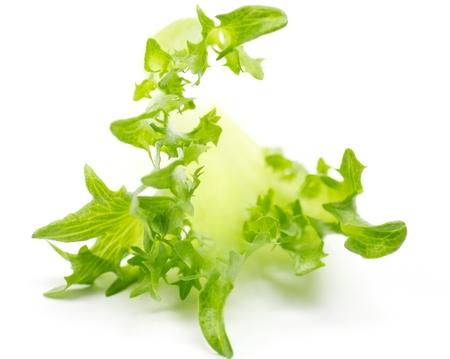 Salad leaves Foto de archivo