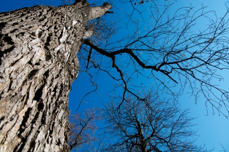 Large Oak Tree Growth into Blue Sky view under the tree Stock Photo - 15908311