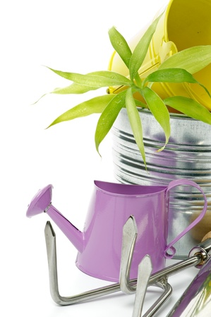 Purple Watering Can with Tin Buckets, Green Plant and Gardening Tools isolated on white background photo