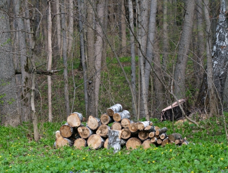 Pile of Neatly Stacked Logs on Natural Forest background Stock Photo - 16406103