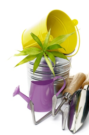 Watering Can with Gardening Tools, Tin and Yellow Buckets and Green Plant closeup on white background  photo