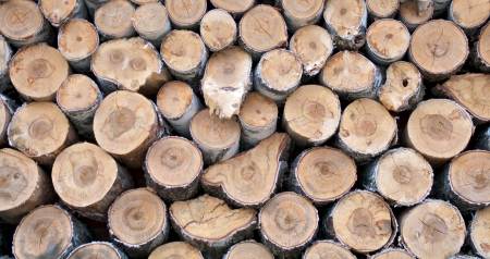 Background of Neatly Stacked Firewood closeup outdoors