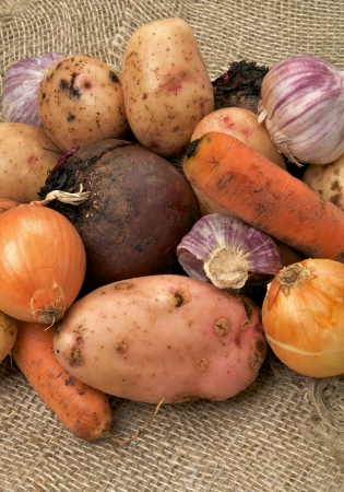 russet potato: Raw Vegetables with Potato, Carrot, Beet, Onion and Garlic closeup on Sacking background