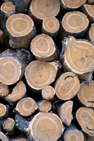 neatly: Background of Neatly Stacked Round Logs closeup outdoors