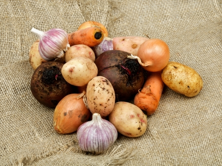 russet potato: Heap of Raw Vegetables with Potato, Beet, Onion, Garlic and Carrot closeup on Sacking background