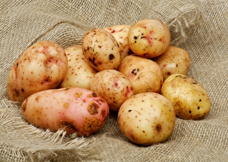 russet potato: Heap of Perfect Raw Potato closeup on Sacking background