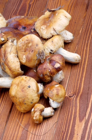 Heap of Raw Peppery Bolete on wooden background photo