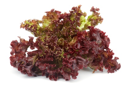 Leafs of Ripe Lollo Rosso Lettuce isolated on white background