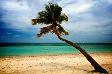 Beautiful Single Palm Tree and Shadow over Ocean Beach on Dramatic Sky background. Stock Photo