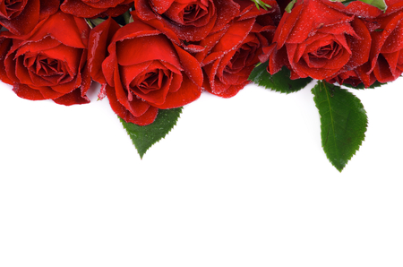 Frame of Beautiful Red Roses with Leaves and Water Droplets isolated on white background photo