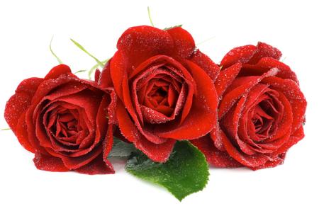 Arreglo de tres rosas rojas hermosas con hojas y gotas de agua aisladas sobre fondo blanco