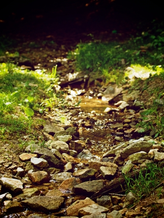 Beauty Forest Brook Between Stones and Green Grass on Lights and Shadows Outdoors Background photo