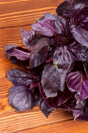 bushy plant: Bunch of Perfect Fresh Purple Basil Leaves closeup on Wooden Background