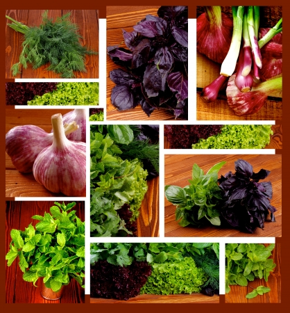 Collection of Various Herbs, Greens, Garlic and Spring Onions closeup on Wooden background photo