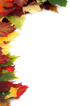 corner border: Corner Border of Multi Colored Autumn Maple Leaf isolated on white background