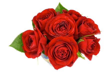 Racimo de siete hermosas rosas rojas Hojas finales con gotas de agua aisladas Foto de archivo
