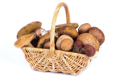 Wicker Basket of Fresh Ripe Porcini Mushrooms, Portabello Mushrooms, Orange-Cap Boletus  and Peppery Bolete isolated  photo