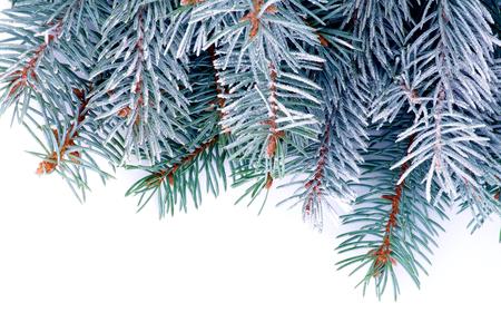 Marco de ramas de abeto azul con escarcha aislado en fondo blanco Foto de archivo