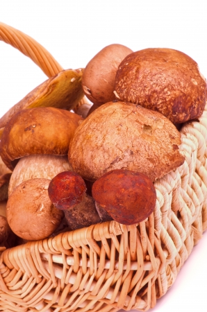 peppery: Fresh Ripe Porcini Mushrooms, Portabello Mushrooms, Orange-Cap Boletus  and Peppery Bolete in Wicker Basket closeup on white background Stock Photo