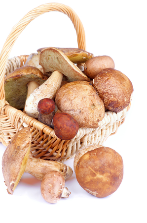 Heap of Raw Ripe Porcini Mushrooms, Orange-Cap Boletus and Peppery Bolete in Wicker Basket isolated on white background photo