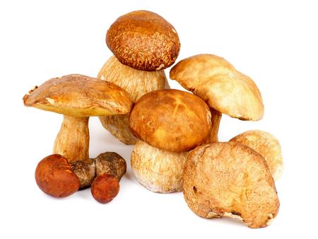 peppery: Heap of Fresh Ripe Porcini Mushrooms, Orange-Cap Boletus and Peppery Bolete isolated on white background