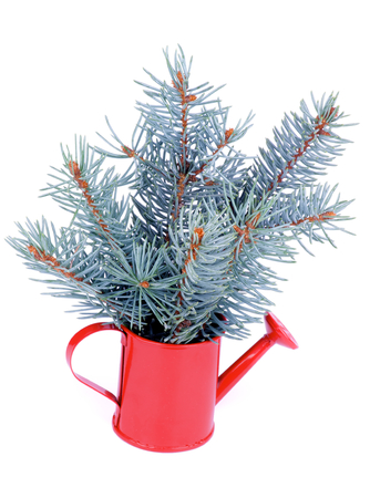 Bunch of Blue Spruce Branches with Little Fir Cones in Red Watering-can isolated on white background Foto de archivo