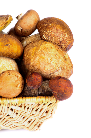 Wicker Basket with Fresh Ripe Portabello Mushrooms, Orange-Cap Boletus  and Peppery Bolete closeup on white  photo