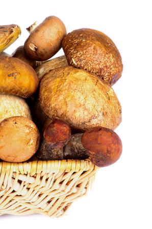 peppery: Wicker Basket with Fresh Ripe Portabello Mushrooms, Orange-Cap Boletus  and Peppery Bolete closeup on white