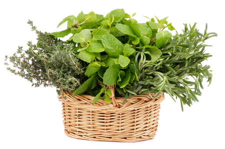 Bunch of Fresh Rosemary, Mint and Thyme in Wicker Basket isolated on white  photo