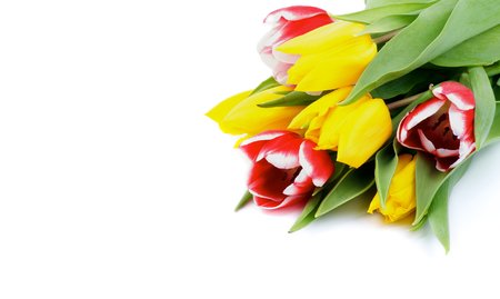 Corner of Yellow and Red-White Tulips isolated on white photo