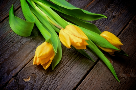Bunch of Three Yellow Spring Tulips closeup on Rustic Wooden background photo