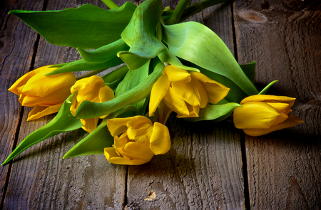 Heap of Five Yellow Spring Tulips closeup on Rustic Wooden background photo