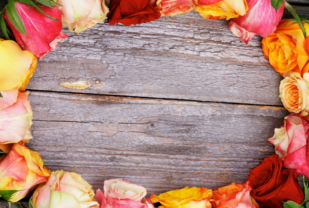 Ellipse Frame of Mixed Colorful Roses closeup on Rustic Wooden background photo