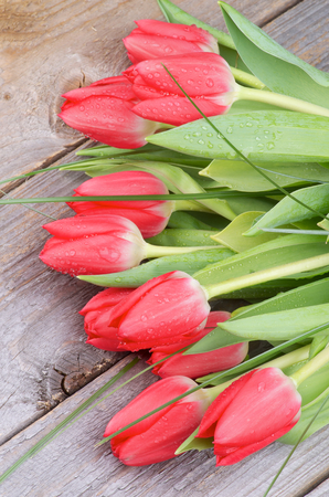 Bouquet of Beautiful Spring Red Tulips with Green Grass and Water Drops isolated on Rustic Wooden background. Stock Photo
