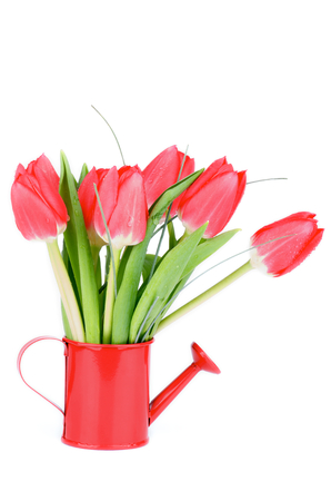 Bunch of Spring Red Tulips with Green Grass in Watering Can isolated on White background photo
