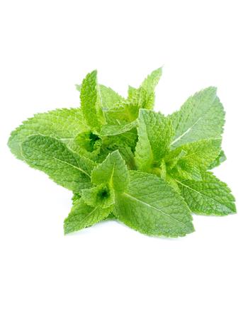 Manojo de hojas de menta fresca y húmeda aislados en fondo blanco