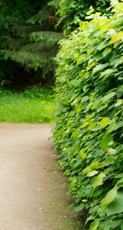 пышной листвой: Хеджирование пышной листвой Кусты Наряду Sand дороге на открытом воздухе Фото со стока