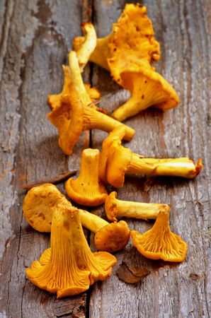 Fresh Raw Chanterelles Mushrooms In a Row on Rustic Wooden background photo