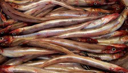 Background of Fresh Raw Sea Eel (Conger) closeup photo