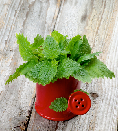 Bunch of Perfect Fresh Green Lemon Balm Leafs in Red Watering Can isolated on Rustic Wooden background photo