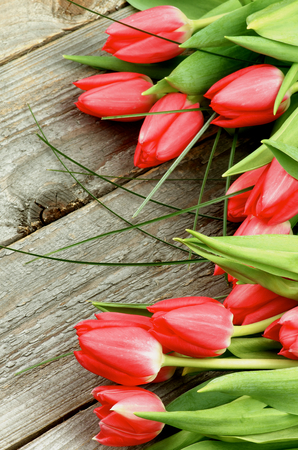 Arrangement of Beautiful Spring Red Tulips with Green Grass isolated on Rustic Wooden background photo