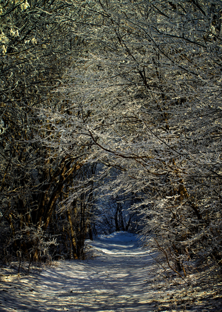 winter road: Winter Road through Snowy Trees Alley in Frosty Day Outdoors