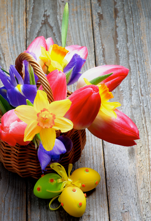 purple irises: Bunch of Yellow Daffodils, Magenta Tulips, Purple Irises in Wicker Basket with Colored Easter Eggs closeup on Rustic Wooden background Stock Photo