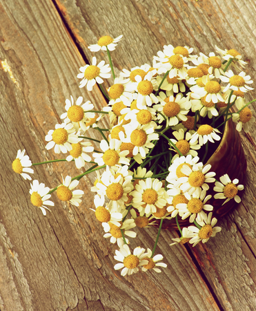 retro styled: Bouquet of Garden Small Camomiles in Ceramic Bowl closeup on Rustic Wooden background. Retro Styled Stock Photo
