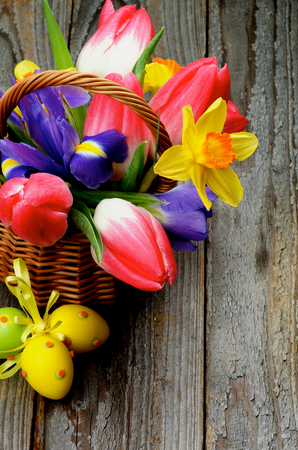 goody: Arrangement of Yellow Daffodils, Magenta Tulips, Purple Irises in Wicker Basket with Yellow Easter Eggs closeup on Rustic Wooden background