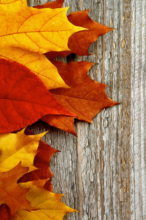 autumn leafs: Frame of Red, Orange and Brown Autumn Leafs isolated on Rustic Wooden background
