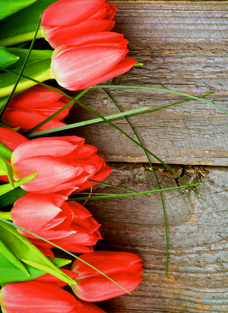 Arrangement of Beautiful Spring Red Tulips with Green Grass isolated on Cracked Rustic Wooden background photo